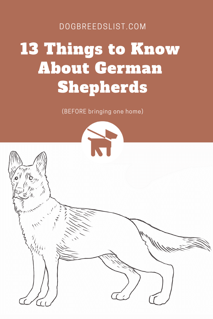 13 Things to Know About German Shepherds