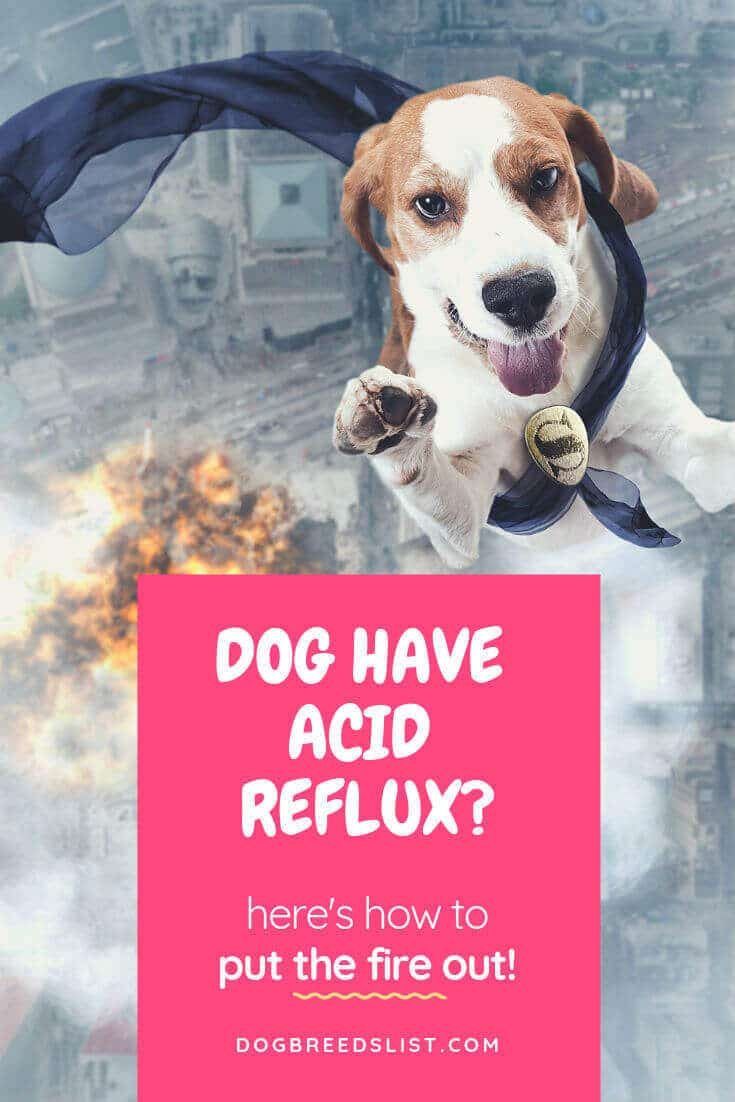 Natural ways to treat acid reflux in dogs