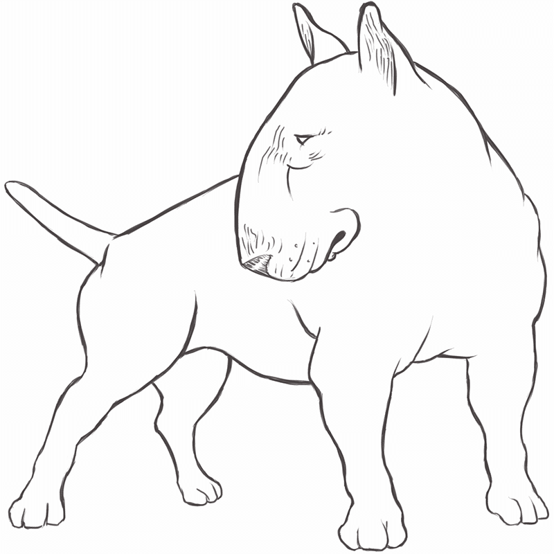 Bull Terrier drawing by Dog Breeds List