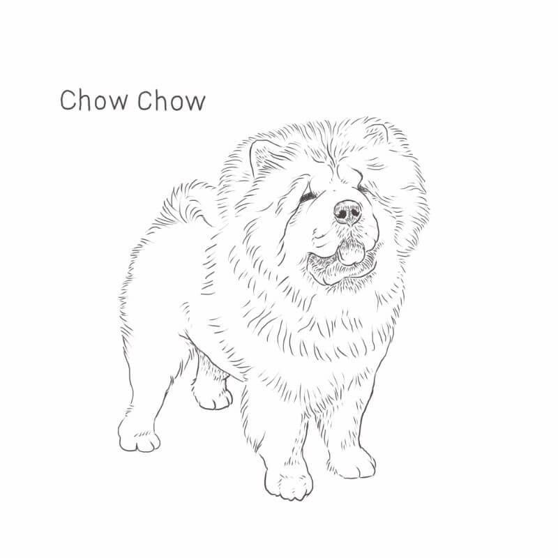 Chow Chow drawing by Dog Breeds List