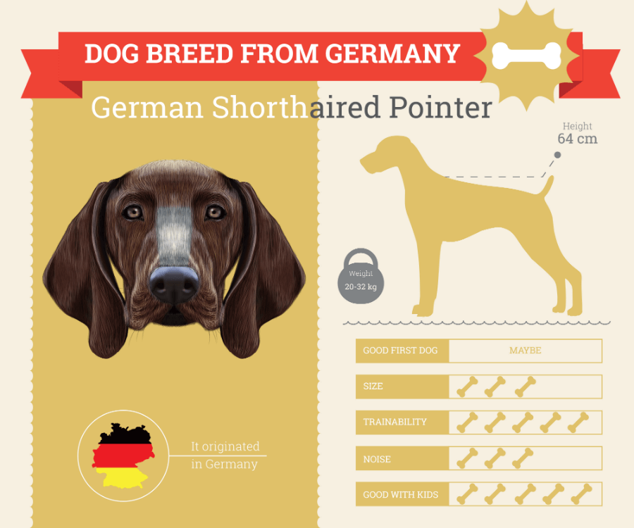 German Shorthaired Pointer Dog Breed Information Infographic