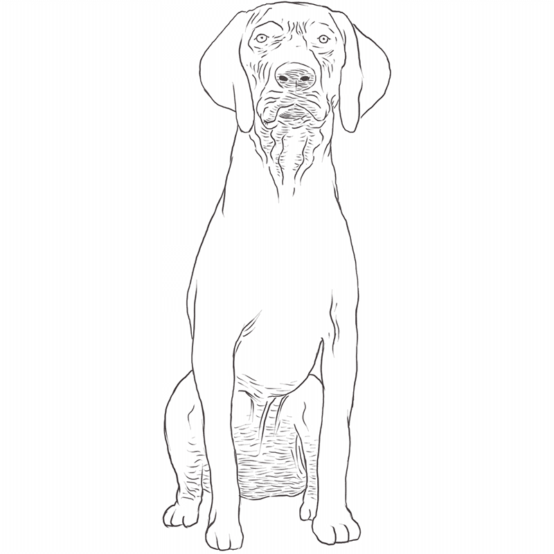 German Shorthaired Pointer drawing by Dog Breeds List