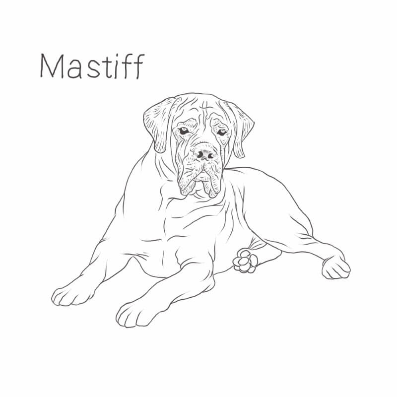Mastiff dog drawing by Dog Breeds List