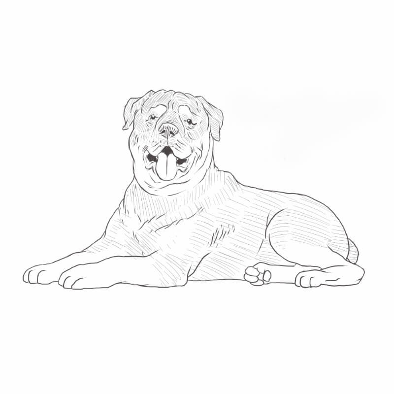 Rottweiler drawing by Dog Breeds List