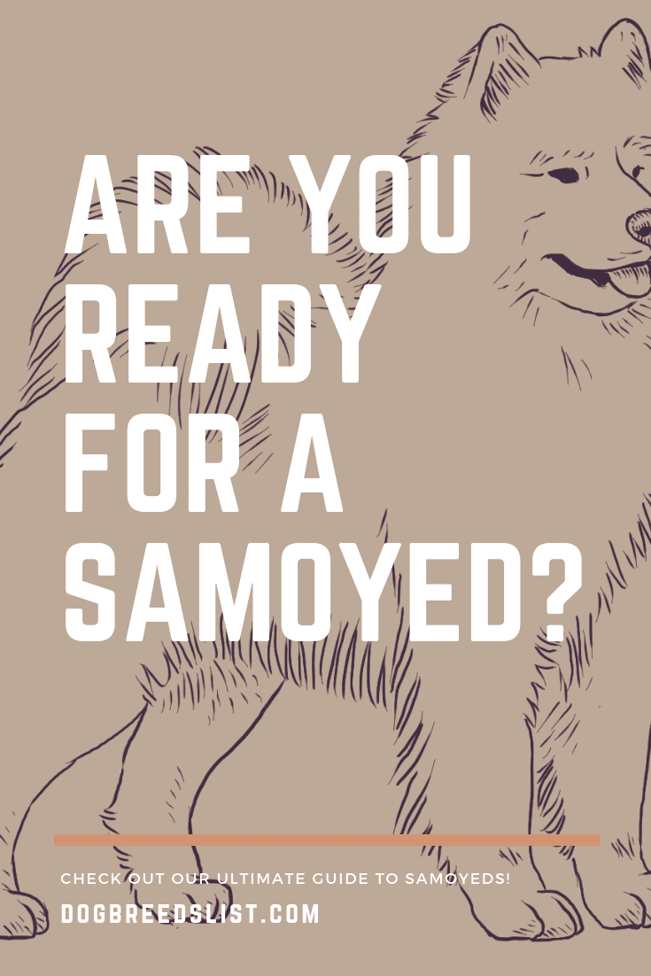 Samoyed Owner's Guide