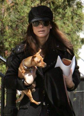 Sandra Bullock adopted Chihuahua