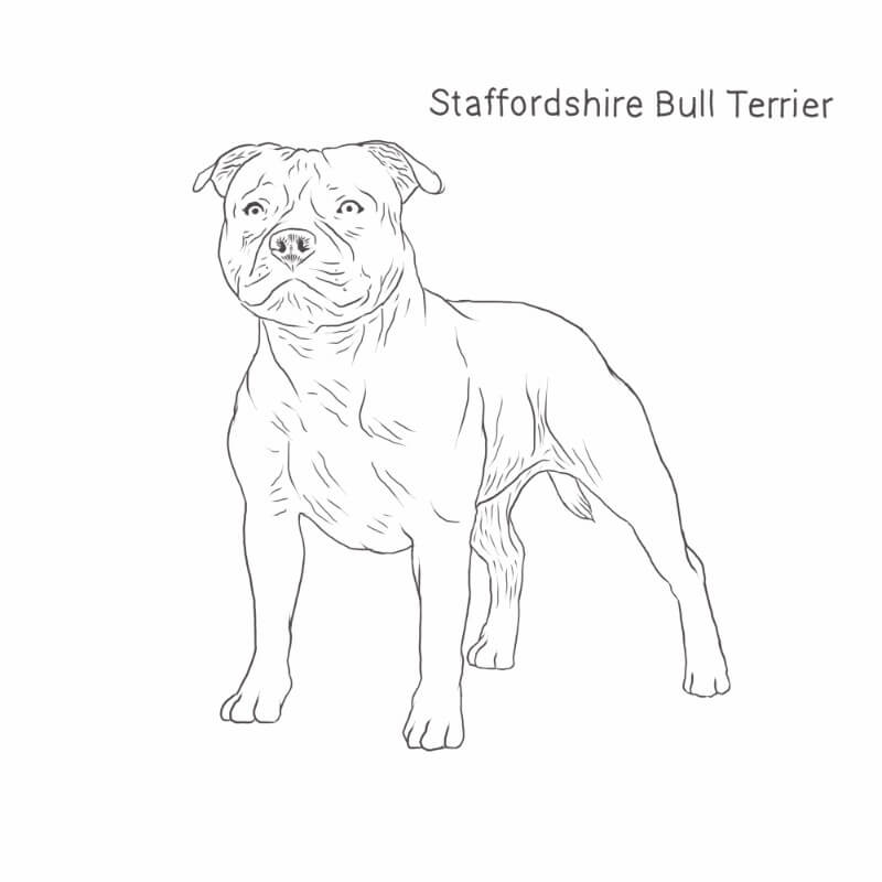 Staffordshire Bull Terrier drawing by Dog Breeds List