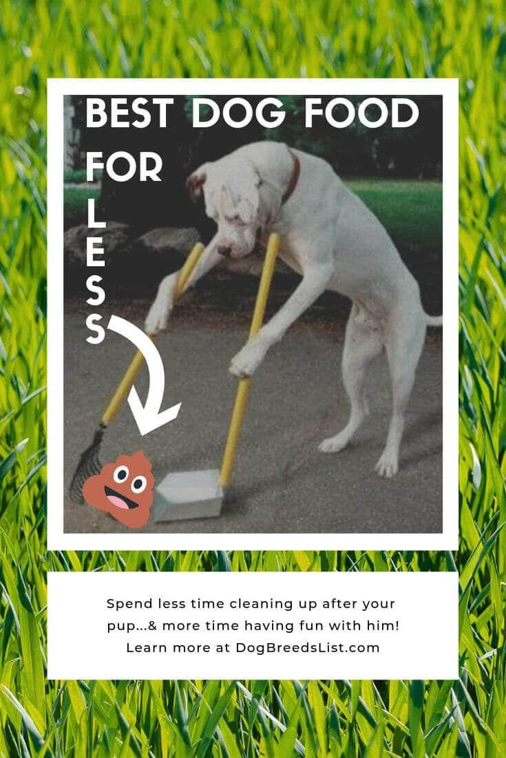 Best dog food for less poop