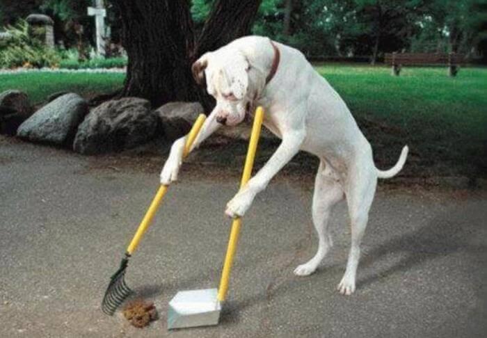doggie janitor