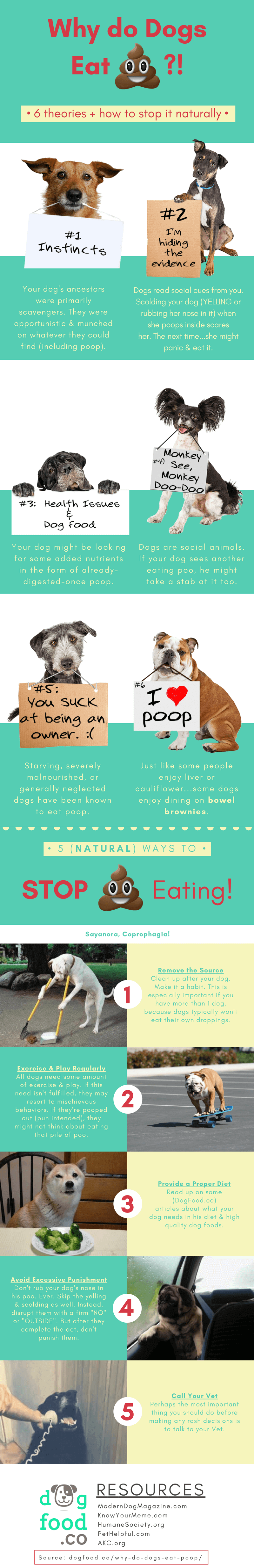 Why do dogs eat poop infographic