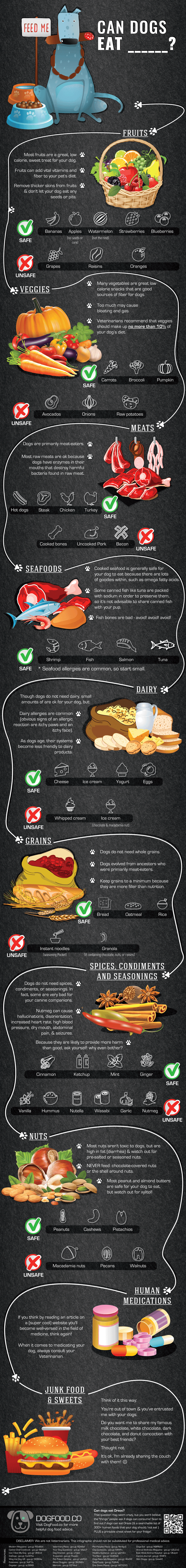 Can dogs eat Infographic