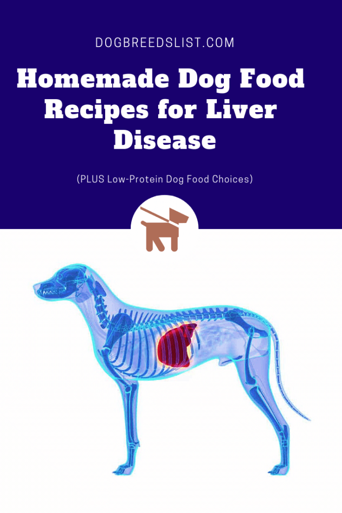 Best Low Protein Dog Food for Liver Disease including homemade dog food recipes for liver disease