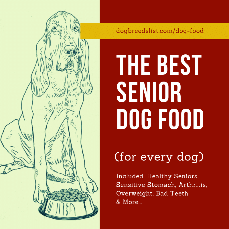 The Best Senior Dog Food for every senior dog