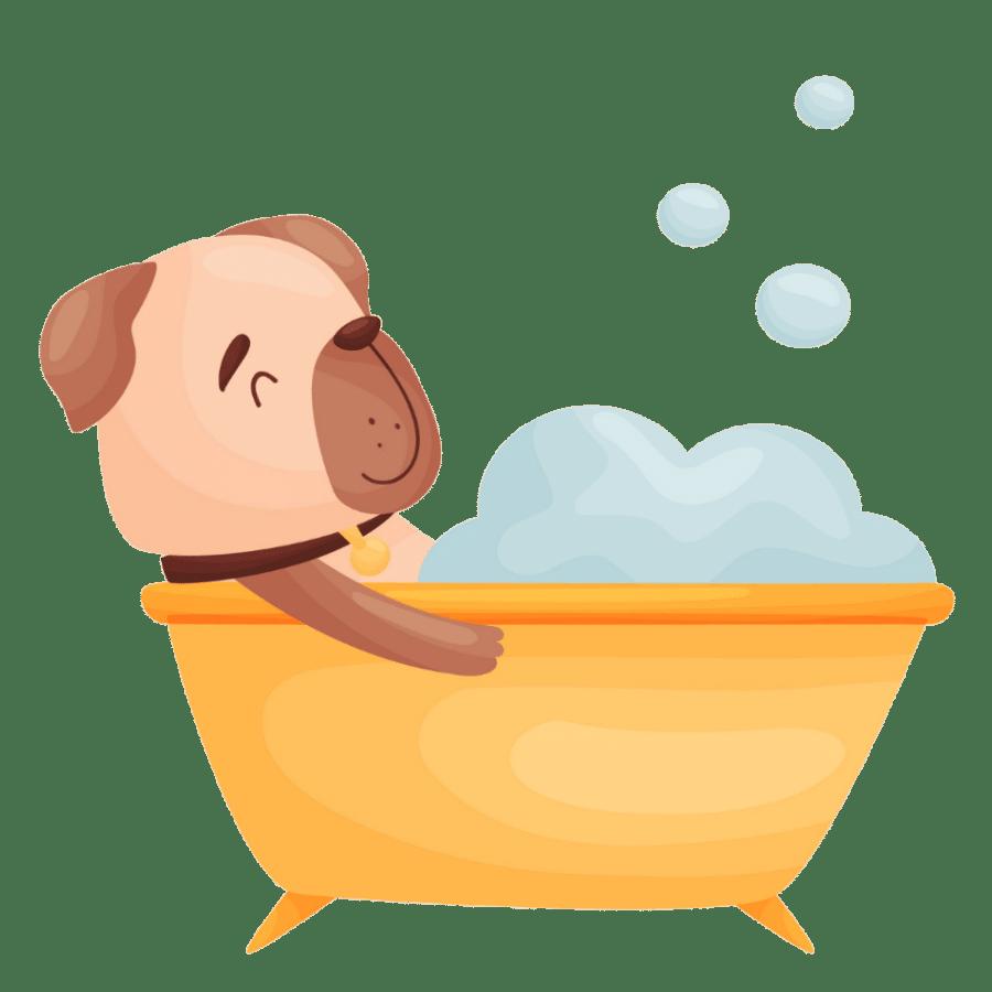 Do Pugs like water?