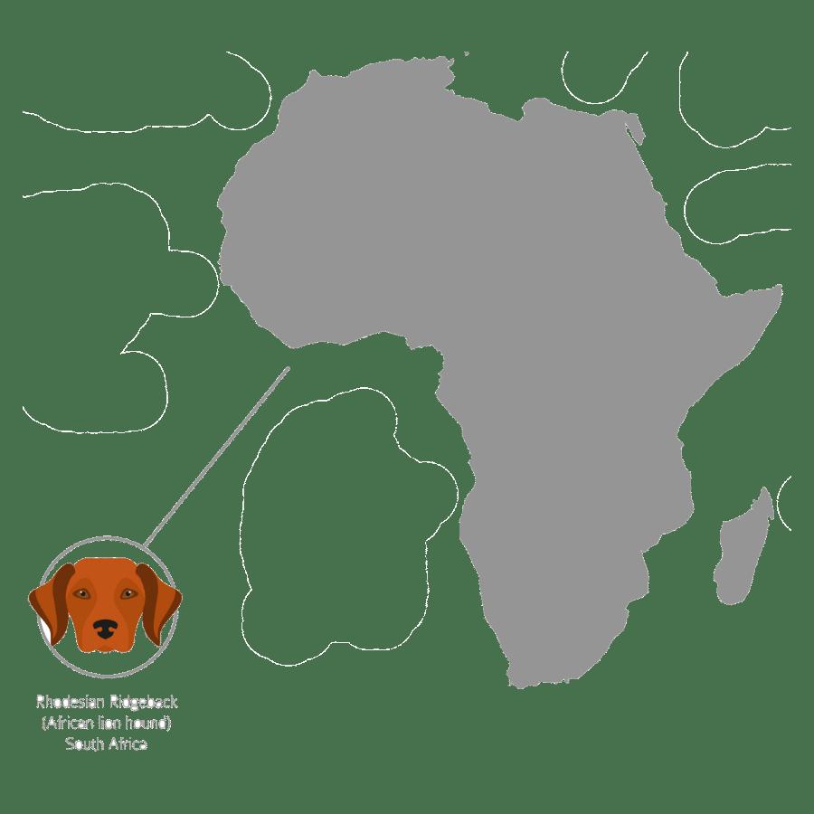 Where are Rhodesian Ridgebacks from? Rhodesian Ridgeback Origin