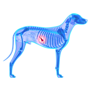 Dog pancreatitis death rate