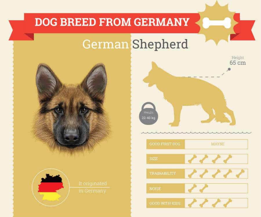 German Shepherd Dog Breed Information Infographic