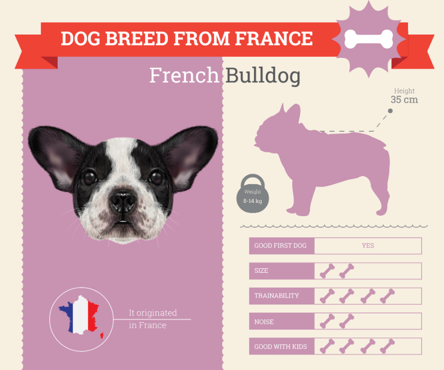 French Bulldog dog breed information infographic
