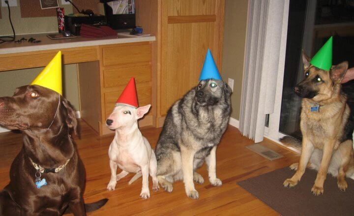 The Original Party Dogs