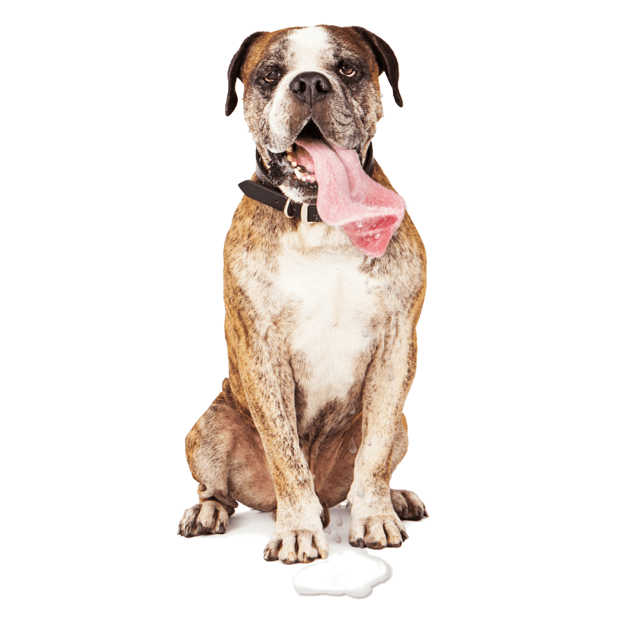 Boxer Drooling Do Boxers Drool A Lot Dog Breeds List