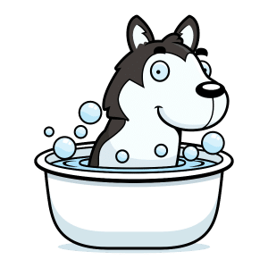 Do Huskies like water?