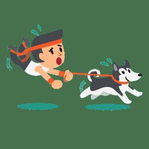 How fast can Huskies run?