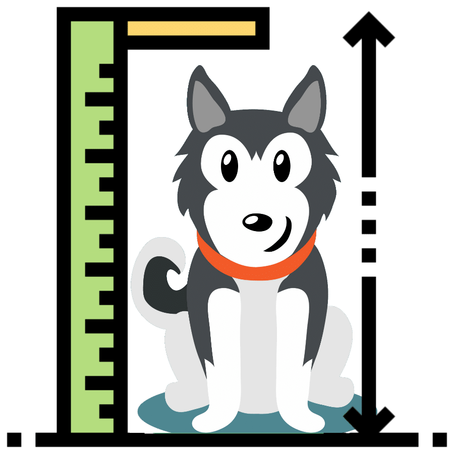 Siberian Husky size