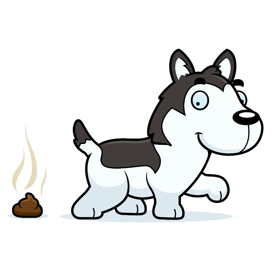 Are Huskies easy to potty train?