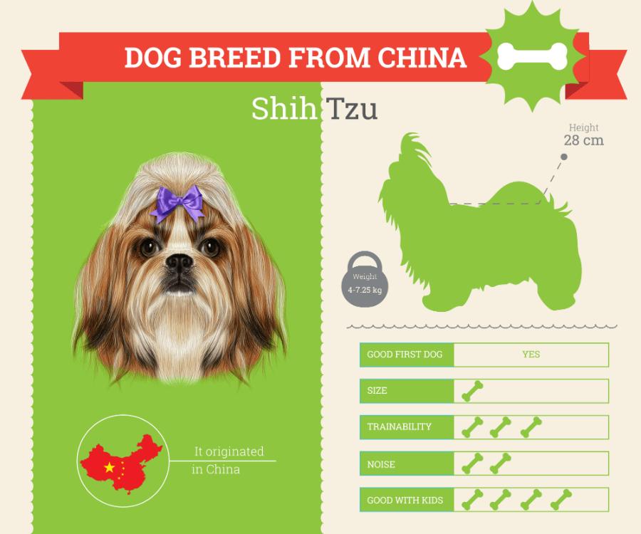Shih Tzu Dog Breed Information [INFOGRAPHIC]