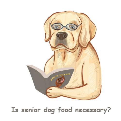 is senior dog food necessary?
