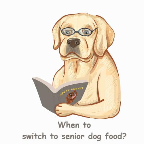 when to switch to senior dog food