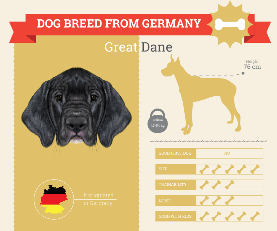 Great Dane Dog Breed Information [INFOGRAPHIC]