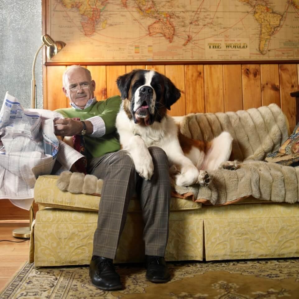 Saint Bernard apartment dog