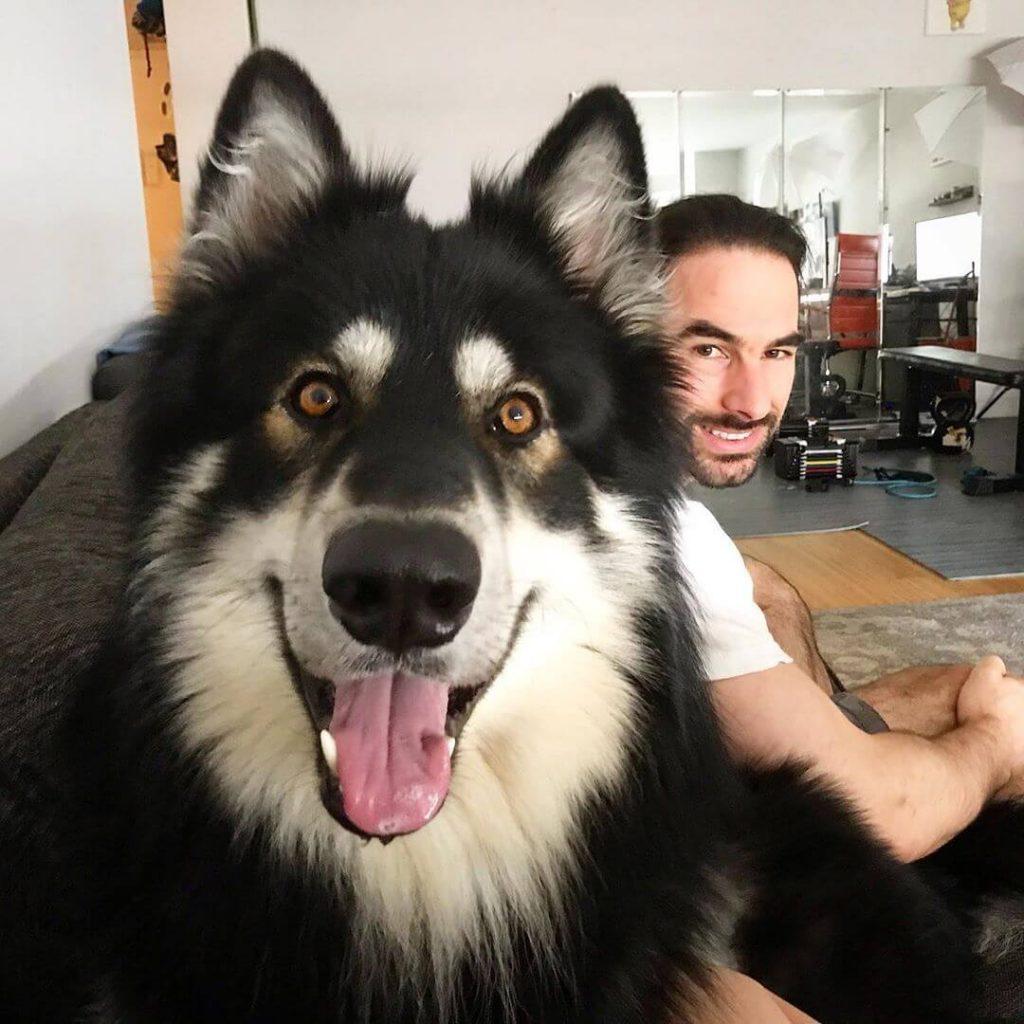 Shiloh Shepherd apartment dog