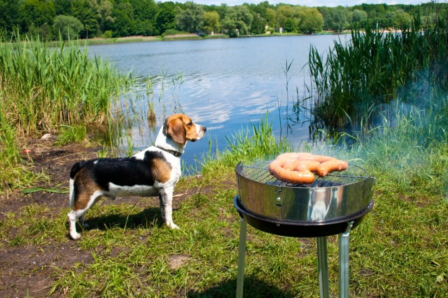 Beagle the boater