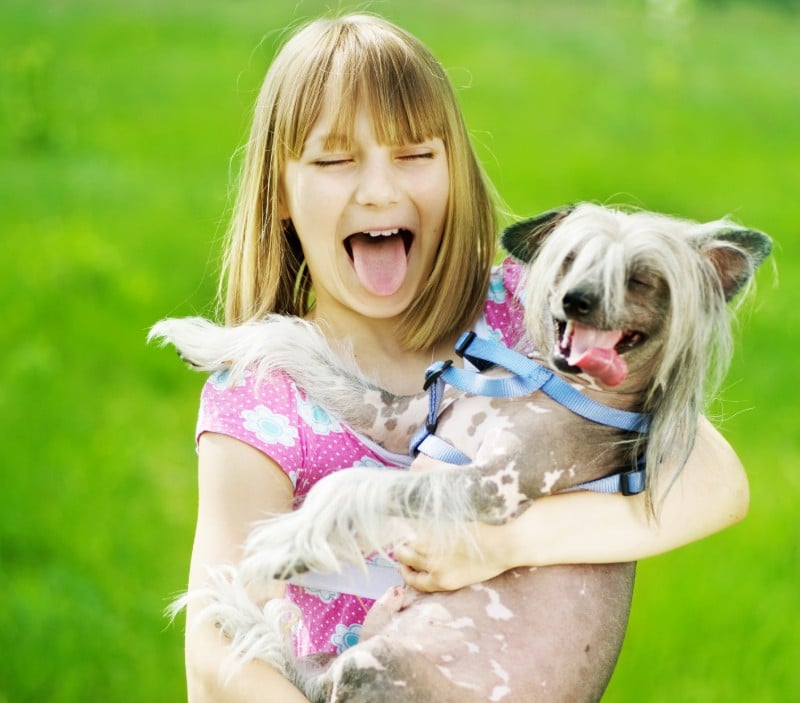 Chinese Crested is one of the best dogs for hot weather