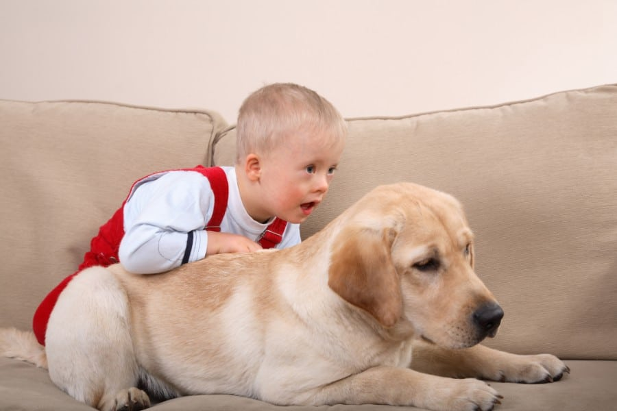 Labrador Retriever and baby
