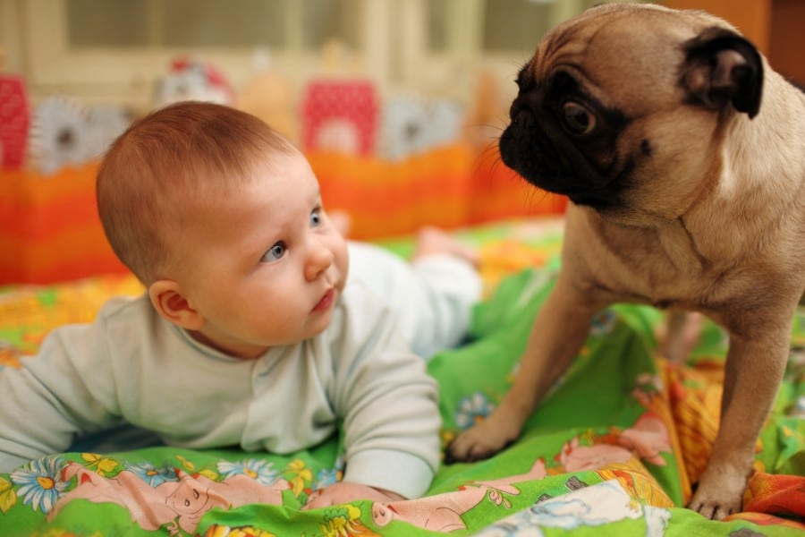 Pug and baby best friends