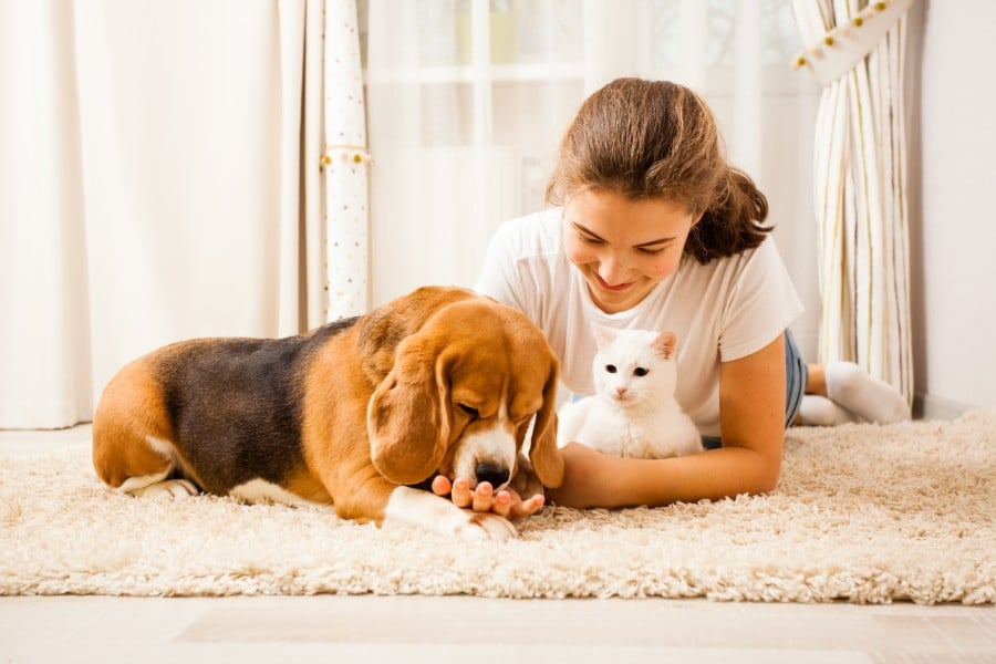 A girl with her Beagle and kitty