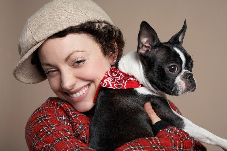 Boston Terrier and buddy