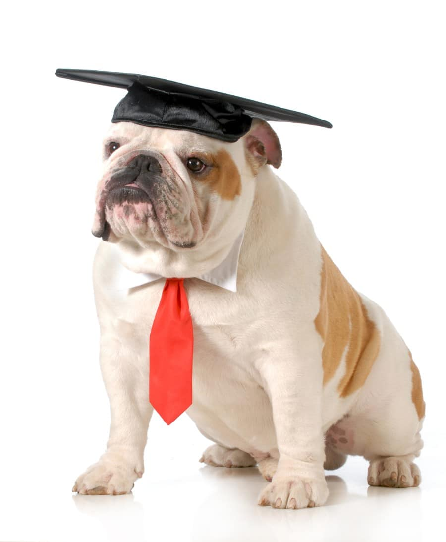 Bulldog college graduation
