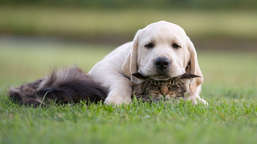 Best dogs for cats