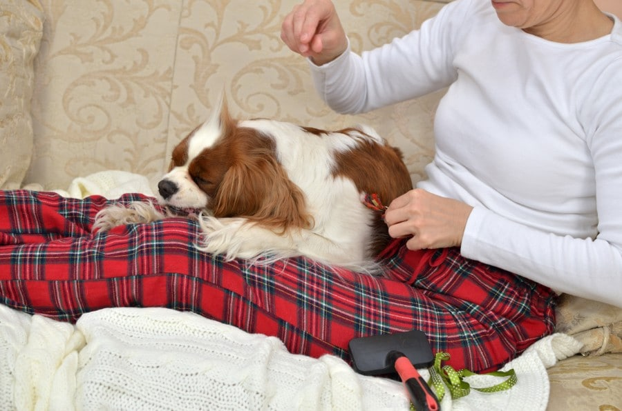Senior woman relaxing with Cavalier King Charles Spaniel