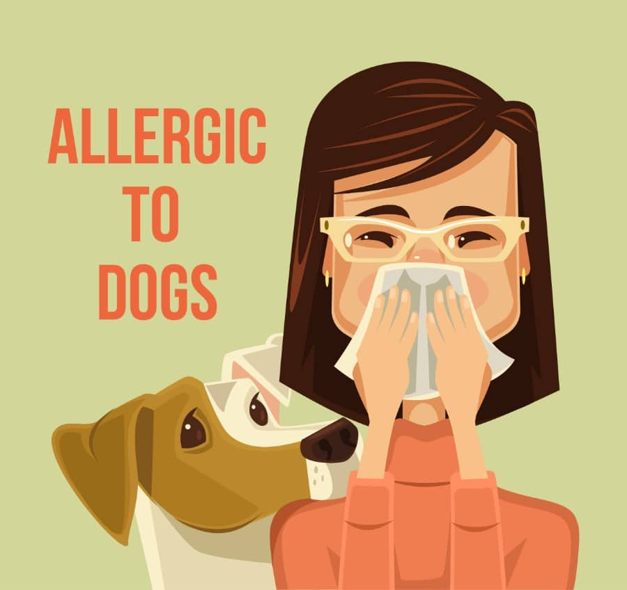 best dogs for allergies 2020