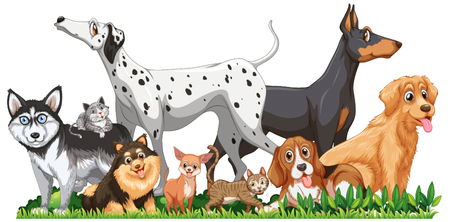 best dog breeds for first time owners