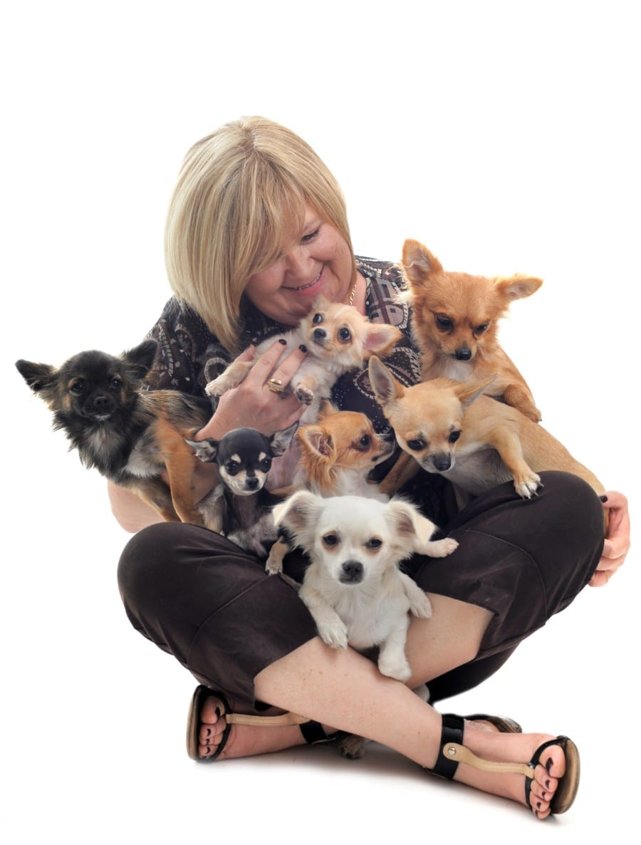 older woman and Chihuahuas
